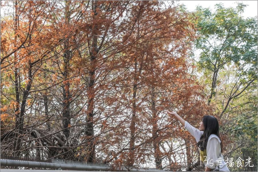 雲林旅遊景點,雲林縣市,雲林,雲林一日遊,yunlin,雲林景點,13雲林遊記,落羽松,雲林落羽松秘境,林內農田水利文物陳列館落羽松,林內落羽松,雲林落羽松景點,大水車落羽松,林內景點,雲林旅遊,雲林超美秘境,農田水利文物陳列館,2020落羽松,林內,林內農田水利落羽松 @13's幸福食光